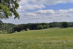 Hinter dem Kuttenbachtal: Blick zum Kloster Steinfeld