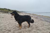 Doxi am Strand auf der Westseite des Bug