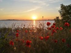 Sonneuntergang über dem Greifswalder Bodden