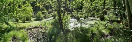 Teich voller Wasserlinsen am Nationalparkzentrum
