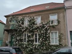 Wie hübsch hier die Rosen an einer Hausfassade blühen