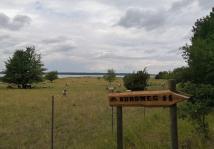 Nahe beim Campingplatz beweiden Schafe das Ufer