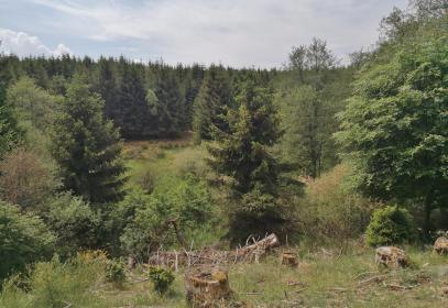 Blick hinunter in das Tal des Wisselbachs