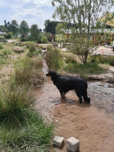 Doxi stärkt sich an einem der Wasserläufe im neuen Barfuß- und Generationenpark in Schmidtheim
