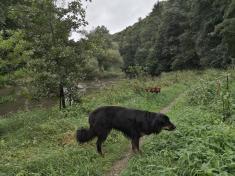 Doxi knabbert am saftigen Ufergras