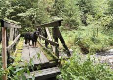 Doxi auf der Brücke über die Weiße Göltzsch