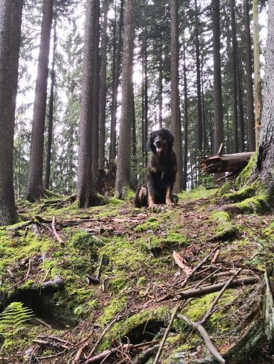 Doxi wartet oben am steilen Anstieg auf mich