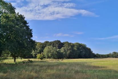 Waldflächen am Rande von Kempen