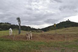 Herdenschutzhunde im Gleichental