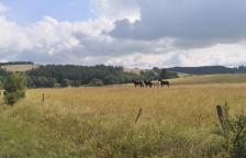 Pferde auf den Weiden oberhalb des Genfbachtals