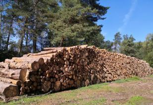 Einer von zahlreichen Lagerplätzen für das frisch geschlagene Holz