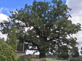 Was für ein imposanter Baum