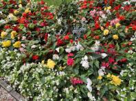 Anfang September: Im Kurpark blüht es immer noch