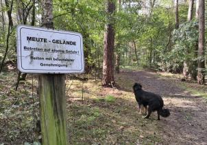 Im Landschaftschutzgebiet wird die Treibjagd geübt - aber heute nicht