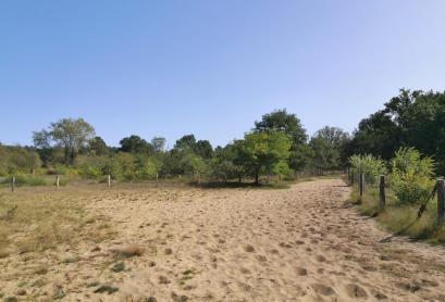 Heideflächen am Rande des Waldes