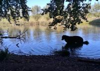 Doxi stärkt sich an einem der Fischteiche im Rotthäuser Bachtal