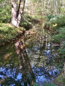 Herrlich, wie sich der Wald im Bachlauf spiegelt