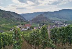 Blick durch die Weinberge bei Mayschoß zur Saffenburg
