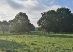Weiden bei Kelzenberg