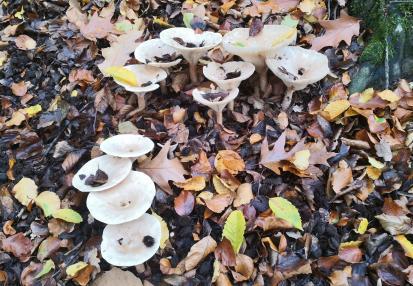 Pilze am Wegesrand im Ittertal