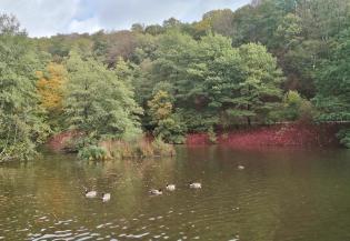 Teich an der Uelfe bei Radevormwald