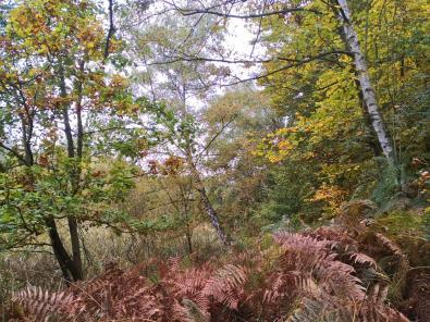 Wald im NSG Gagelbestand