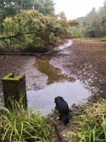 Die letzten Wasserflächen der Teichkette liegen nach dem trockenen Sommer brach