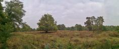 Panoramabild von den Heideflächen im Südosten der Wahner Heide