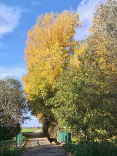 Wie schön die Sonne das Gelb der Bäume zum leuchten bringt