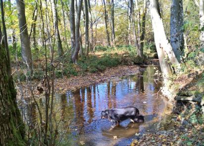 Doxi testet die Wasserqualität der Kall