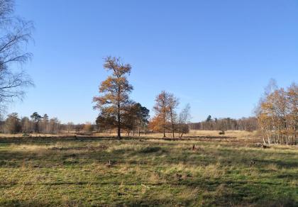 Blick in die Heidefläche