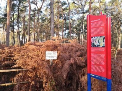 An einer früheren Wasserquelle im Wald