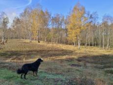 Auf den offenen Flächen dominieren Birken die Landschaft