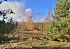 Typisches Landschaftsbild in der Teverener Heide