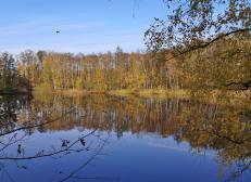 Der Seerosensee - Eine von zahlreichen Wasserflächen im Naturschutzgebiet