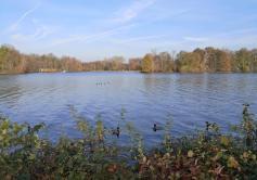 Blick vom Ufer auf die Vogelschutzinsel im Unterbacher See