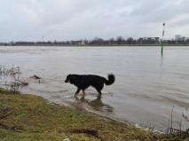 Der Rhein führt bereits Hochwasser