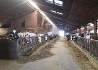 Noch sind die Kühe im Stall, bald geht es wieder hinaus auf die Wiesen