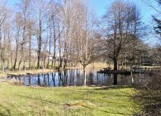 Hübscher Teich an der Kyll in Frauenkron