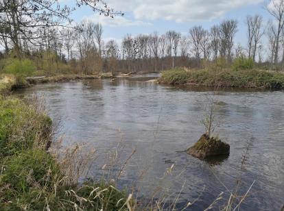Naturbelassene Landschaft am Fluss