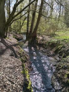 Am Rumbach im Naturschutzgebiet Rumbachtal