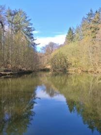 Wasserfläche am Forsthaus Hasenacker im Tüschenwald