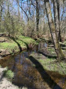 Malerisch schlängelt sich der Schagbach durch den Wald