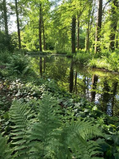 Wasserfläche im Stadtpark