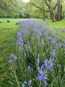 Blaues Band im Kaisergarten