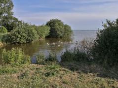 Wildgänse nahe der Schleuse mit dem Abfluss der Hunte aus dem See