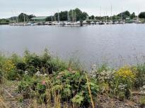 Uferpflanzen am Yachthafen