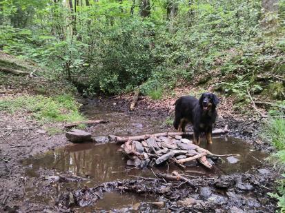 Endlich findet Doxi eine Trinkstelle im Wald
