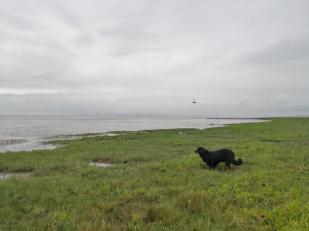 Doxi checkt erst mal die Uferwiesen ...