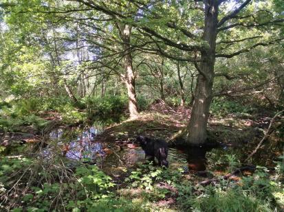 Feuchte Landschaft am Lefender Ven zwischen Rodebac und Wald
